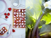 Gp, jordgubbspaj, rabarber